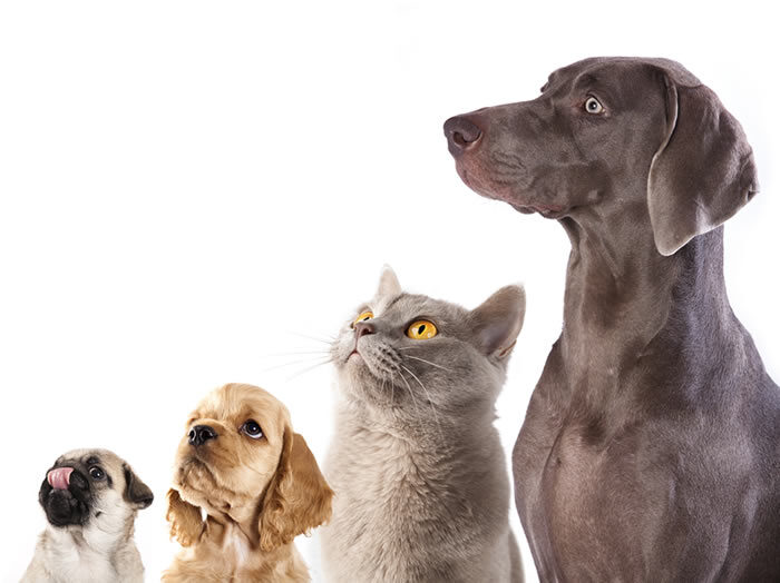 Wellness Exams for Dogs and Cats