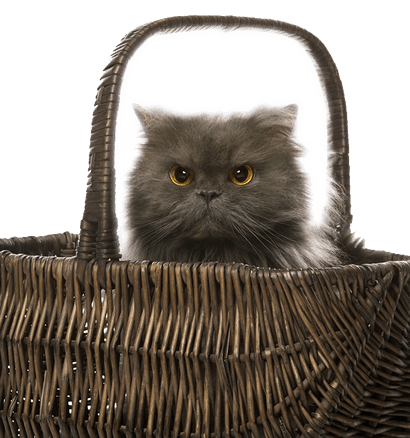 Cats-Carriers-Vets