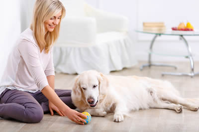 dog-stem-cell-therapy