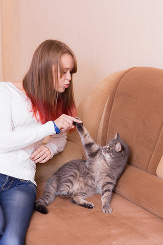 playing with your cat for exercise