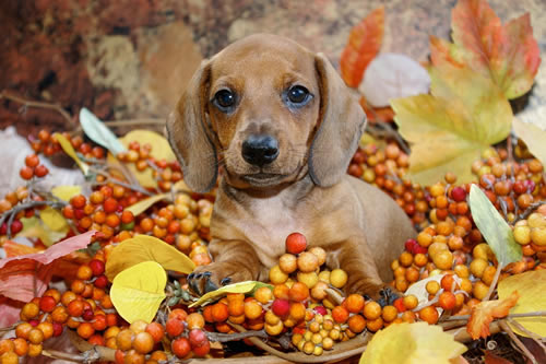 reasons to be thankful for your pet