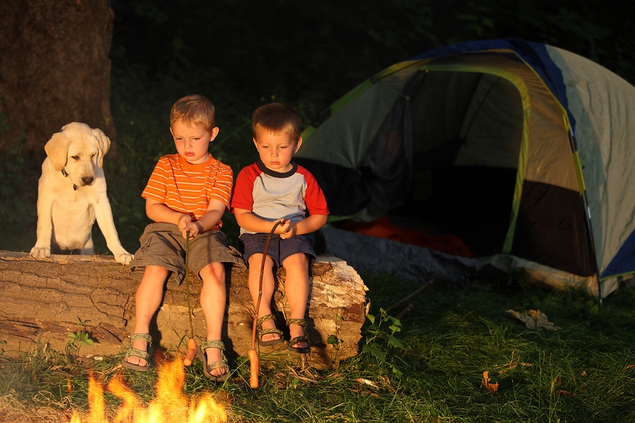 Boys and a dog roast hot dogs over a camp fire
